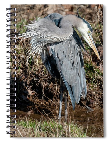 Great Blue Heron The Poser Spiral Notebook