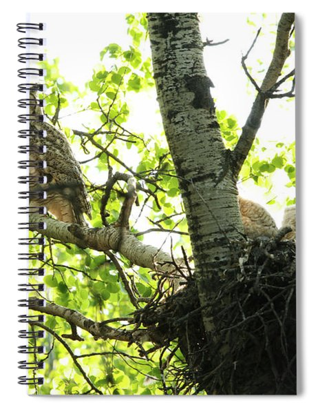 Great Horned Owl And Babies Spiral Notebook