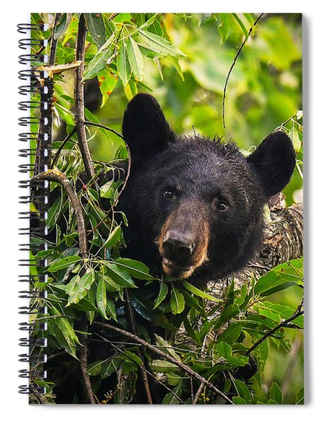 Great Smoky Mountains Bear - Black Bear Spiral Notebook