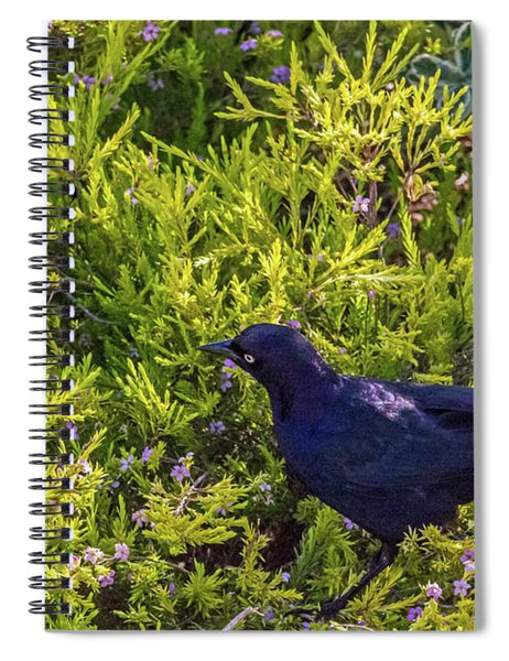 Great-tailed Grackle In Flowers Spiral Notebook
