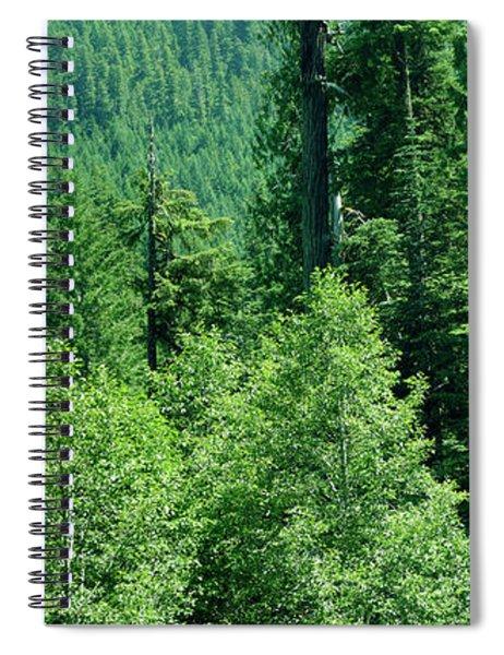 Green Conifer Forest On Steep Hillside  Spiral Notebook