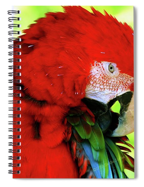 Green-winged Macaw Spiral Notebook