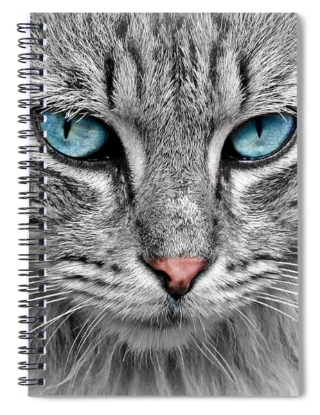Grey Cat With Blue Eyes Spiral Notebook