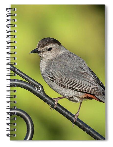 Grey Catbird 2019-1 Spiral Notebook