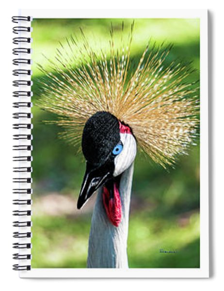 Grey Crowned Crane Gulf Shores Al Collage 1 Spiral Notebook
