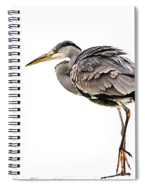 Grey Heron On Snow Spiral Notebook