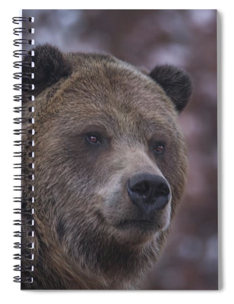 Grizzly  Spiral Notebook