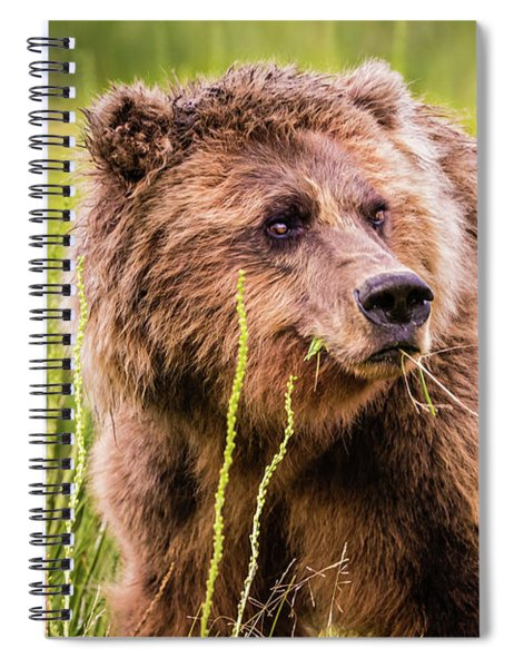 Grizzly In Lake Clark National Park, Alaska Spiral Notebook