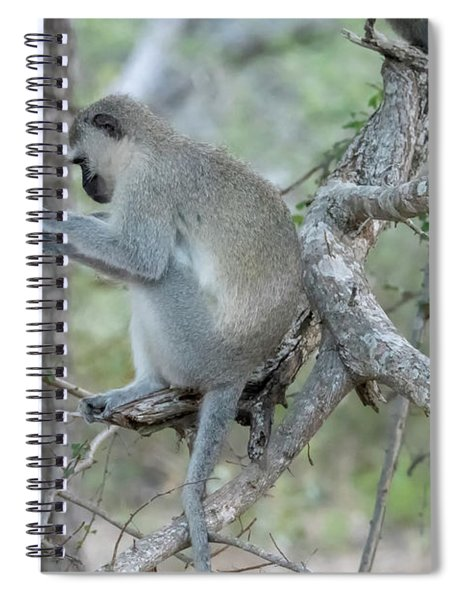 Grooming Or Reading Spiral Notebook