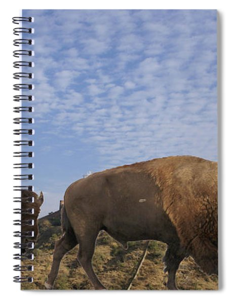 Group Of Bison Walking Against Rocky Mountains  Spiral Notebook
