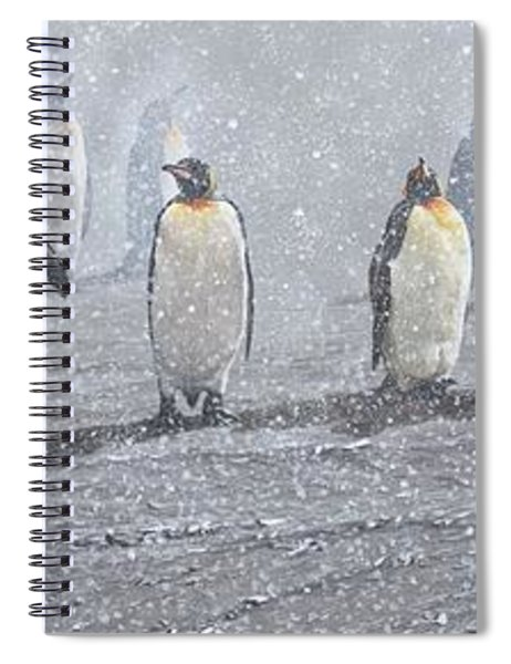 Group Of King Penguins In The Snow Spiral Notebook by Alan M Hunt
