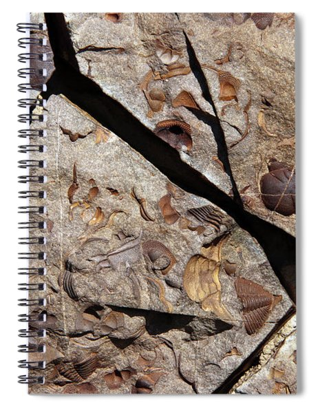 Group Of Late Crustacean Fossils Spiral Notebook