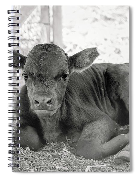 Grumpy Cow Spiral Notebook