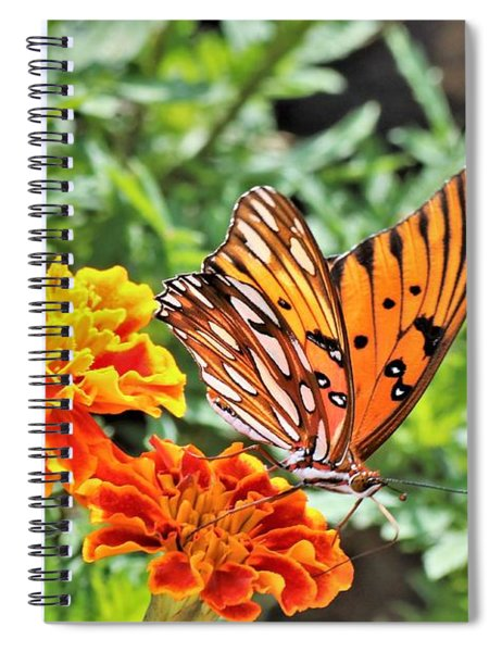 Gulf Fritillary On Orange Marigolds Spiral Notebook