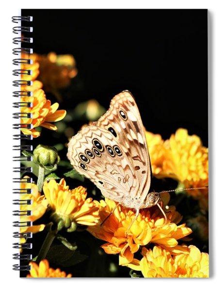 Hackberry Emperor On Gold Spiral Notebook
