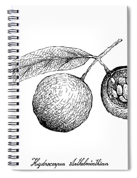 Hand Drawn Of Hydnocarpus Anthelminthicus Fruits On White Background Spiral Notebook
