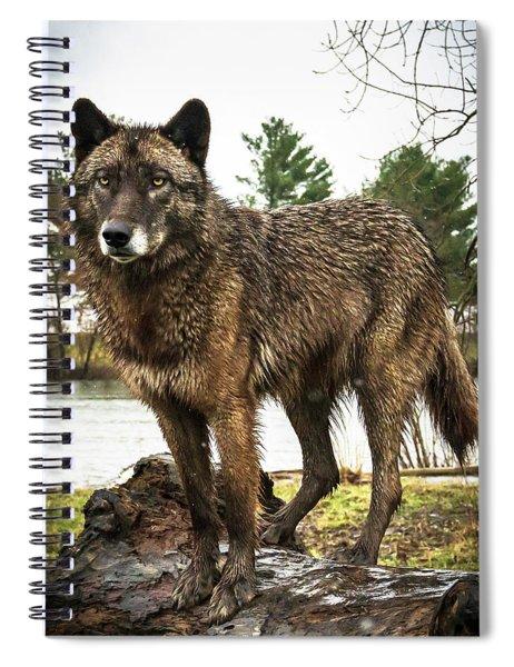 Handsome Niko Spiral Notebook