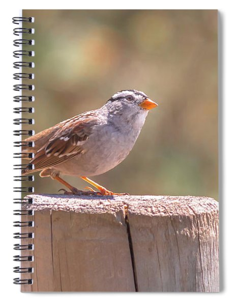 Spiral Notebook featuring the photograph Hanging Out by Alison Frank
