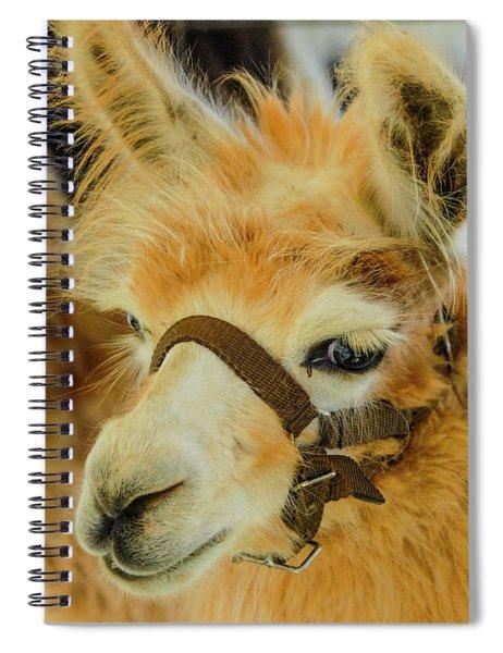 Happy Alpaca Spiral Notebook