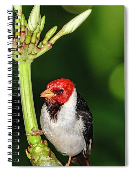 Happy Valentine's Day Bird Spiral Notebook