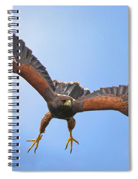Harris Hawk Spiral Notebook