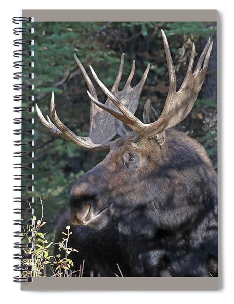 Head Study Of Bull Moose Spiral Notebook