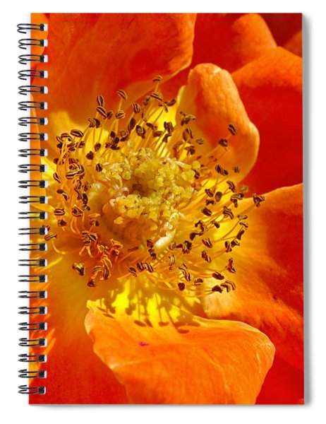 Heart Of The Orange Rose Spiral Notebook