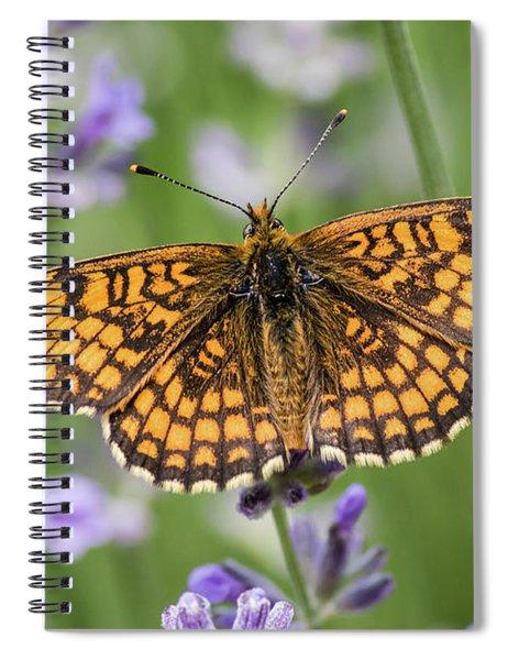 Heath Fritillary On The Lavender Spiral Notebook