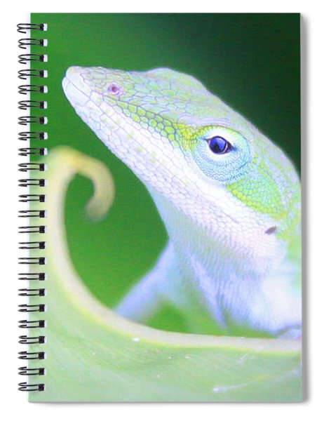 Hello, Anole. 2 Spiral Notebook