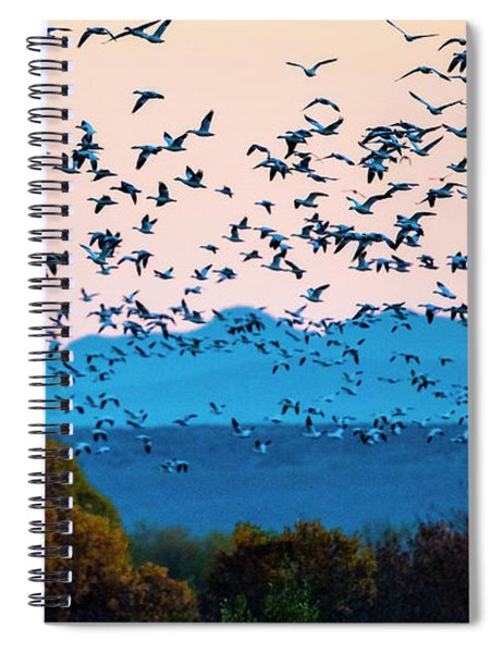 Herd Of Snow Geese In Flight, Soccoro Spiral Notebook