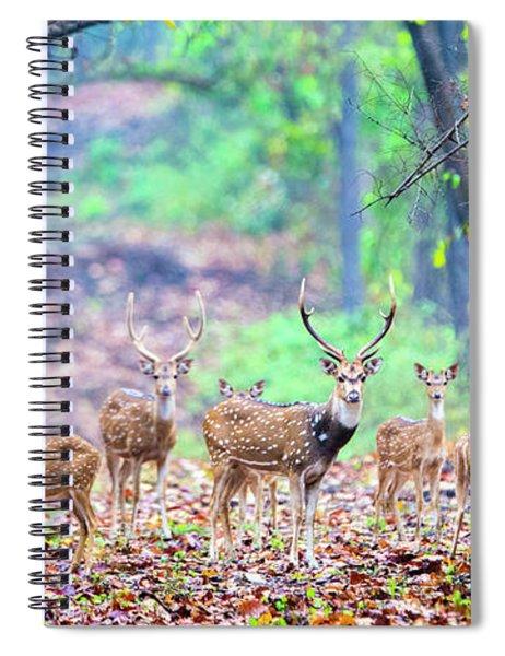 Herd Of Spotted Deer Rusa Alfredi Spiral Notebook