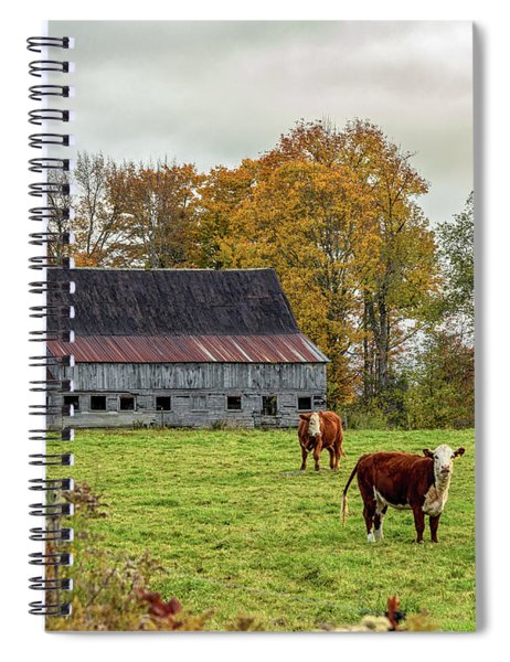 Herefords In Fall Spiral Notebook