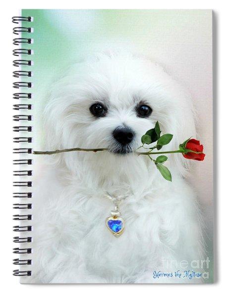 Hermes And Rose Spiral Notebook