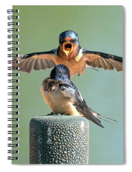 Hey, Babe, Let's Rock N Roll.  Barn Swallows Spiral Notebook