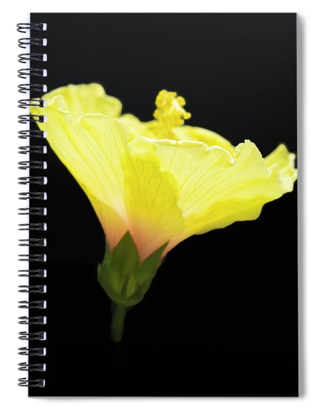 Hibiscus In Black Spiral Notebook