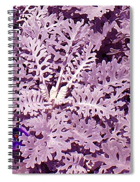 Hide-n-seek Spiral Notebook