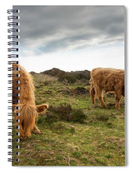 Highland Cattle Feeding At Baslow Edge Spiral Notebook