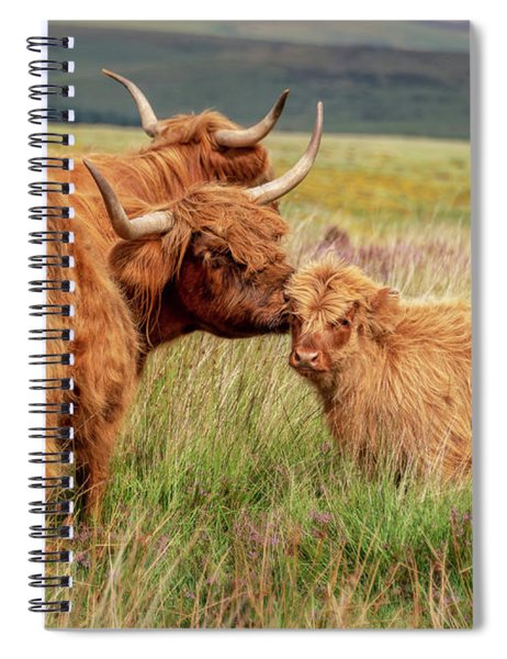 Highland Cow And Calf Spiral Notebook