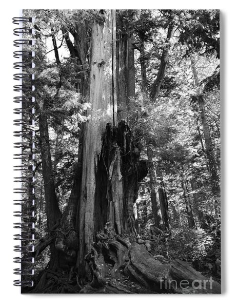 Historic Cedar Spiral Notebook