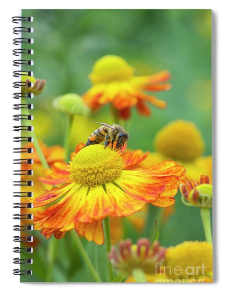 Honey Bee And Helenium Spiral Notebook