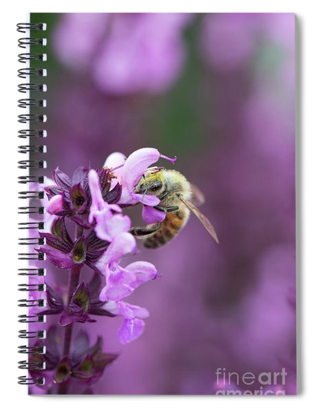 Honey Bee On Salvia Flowers Spiral Notebook