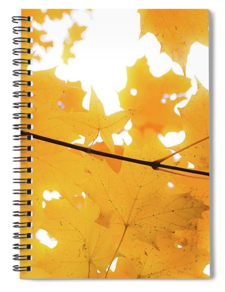 Honey Colored Happiness Spiral Notebook