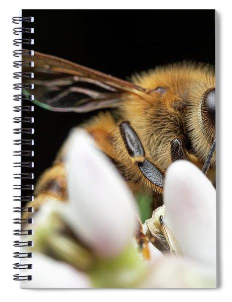Honeybee Peeking Spiral Notebook