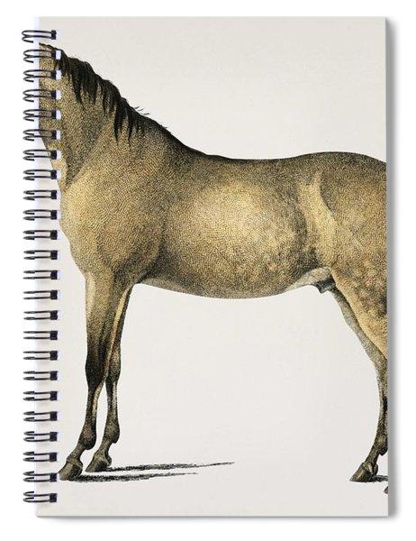 Horse  Equus Ferus Caballus Illustrated By Charles Dessalines D' Orbigny  1806-1876 2 Spiral Notebook