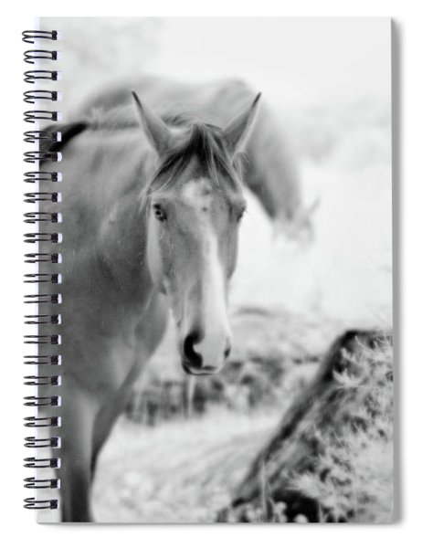 Horse In Infrared Spiral Notebook