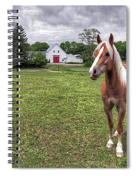 Horse In Pasture Spiral Notebook