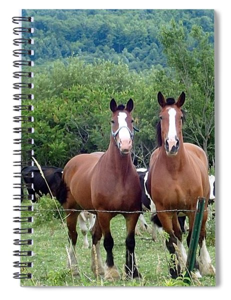 Horses And Cows.  Spiral Notebook
