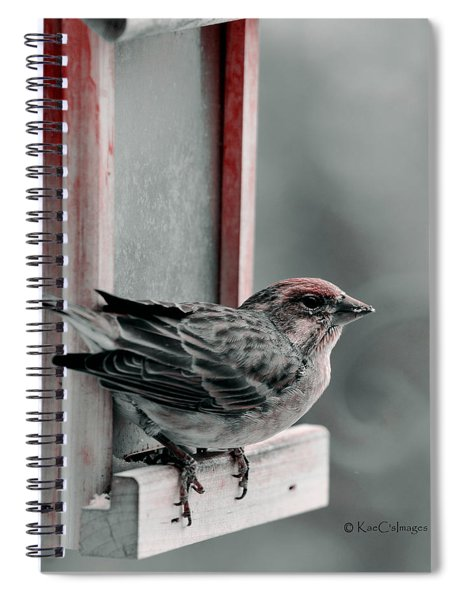 House Finch On Feeder Spiral Notebook