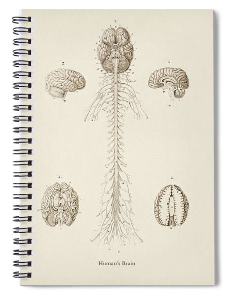 Human S Brain Illustrated By Charles Dessalines D' Orbigny  1806 1876  Spiral Notebook