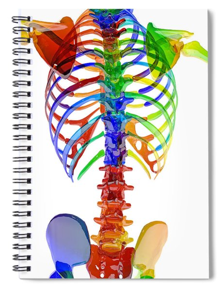 Human Skeleton Color Model Spiral Notebook